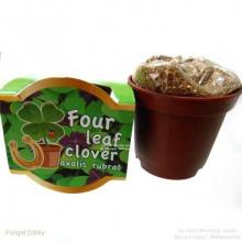 Pot de fleur trèfles à 4 feuilles porte-bonheur
